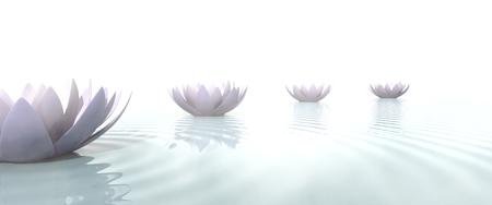 睡蓮が横一列に並ぶ