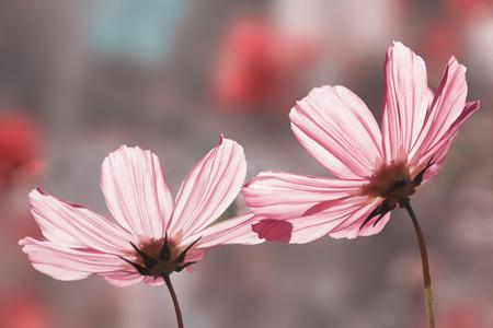 二つの花が重なり合う