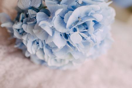 淡いブルーの紫陽花
