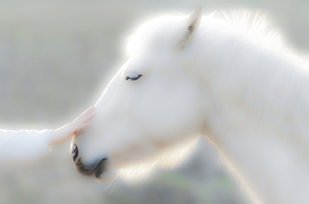 白い光で輝く白い馬