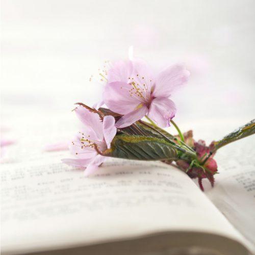 本の上に桜の花