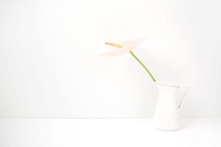 白い花瓶に一輪の花