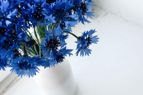 花瓶に青い花